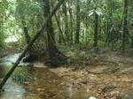 sinharaaja_forest